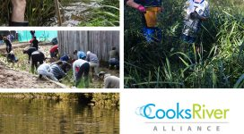Cooks River Alliance Action Plan 2014-2017