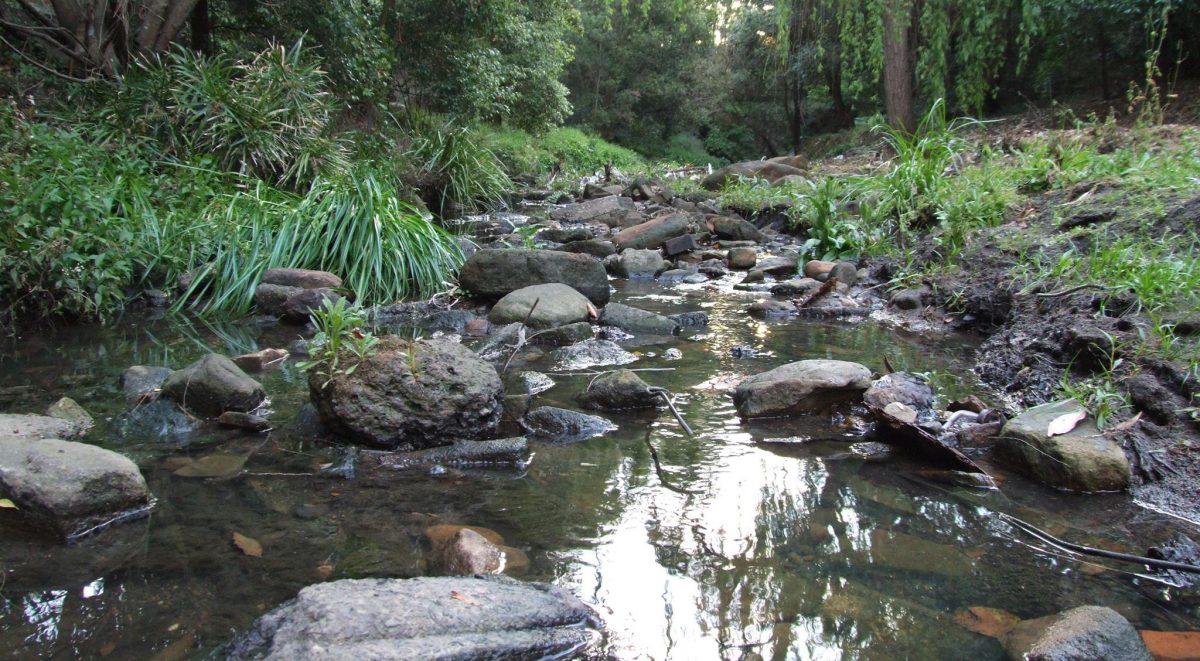 Creek at Binnamittalong Gardens