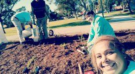 Volunteers planting bushes
