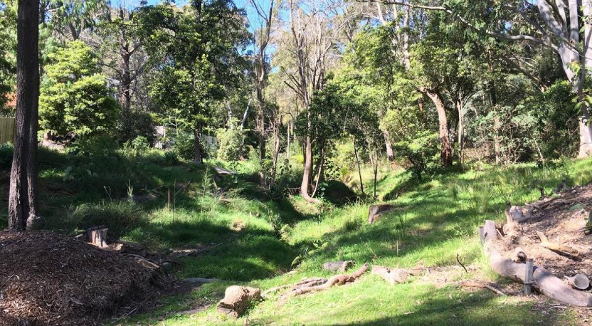 Bushland at Stotts Reserve