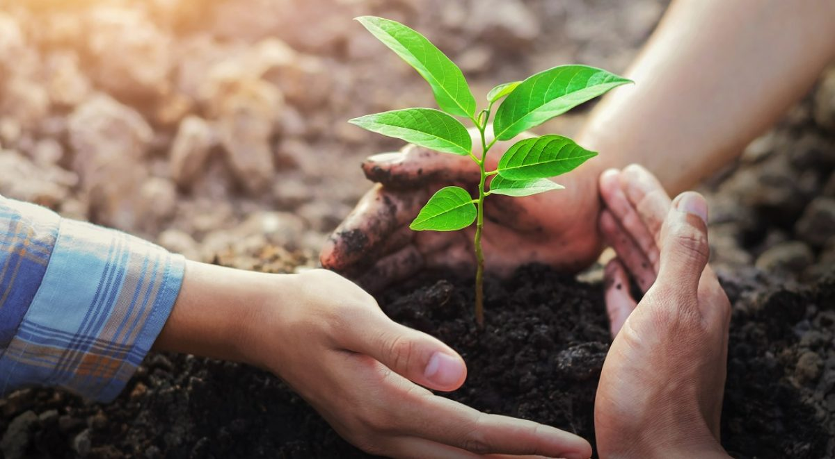 three hands protecting tree planting on soil with sunshine in garden